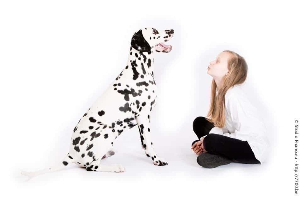 Photo animal de compagnie chien au studio 7700.BE